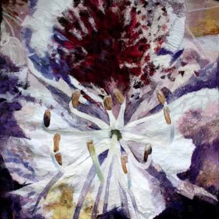Rhododendron macro
